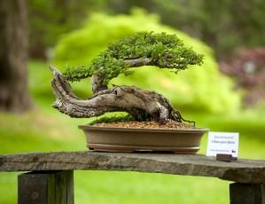 Výstava bonsají v trojské botanické zahradě napříč střední Evropou
