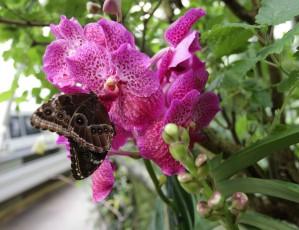 Vzneste se na křídlech křehké krásy: Trojská botanická zahrada zve na výstavu tropických motýlů