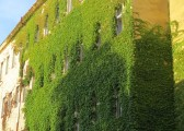Sídlo Strany zelených? Ne, jen zarostlá fasáda domu v centru Prahy