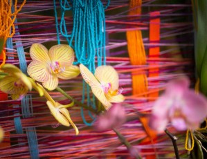 Trojská botanická zahrada láká na výstavu orchidejí