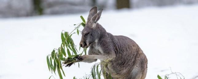 Návštěvníci Zoo Praha mají jednu z posledních šancí vidět zvířata na sněhu