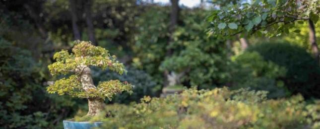 Trojská botanická zahrada hostí přehlídku bonsají