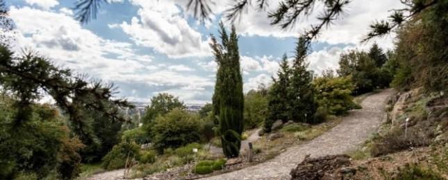 Botanická zahrada ukáže jehličnany domácí, ale i exotické a raritní tropické exempláře