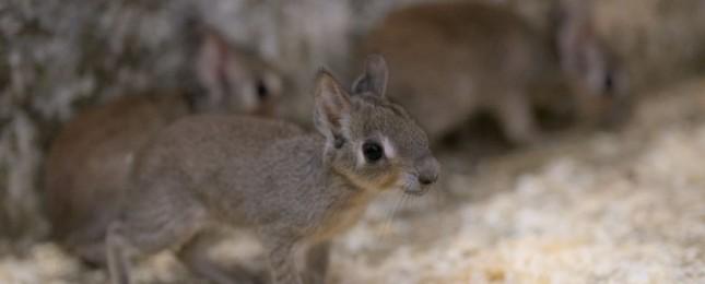 První letošní přírůstky v Zoo Praha