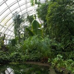 Na Štědrý den zajděte do tropického skleníku Fata Morgana. Vstup i chvojí bude zdarma