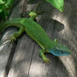 Pražská zoo bude mít novou chráněnou přírodní památku