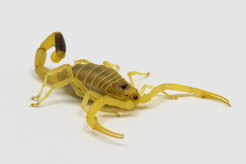 stir-vicerady