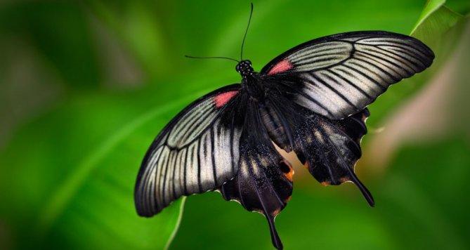 Jaké jsou vztahy motýlů a rostlin? Uvidíte ve Fata Morganě
